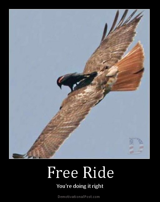 """A clever bird-Best """"Doing It Right"""" Memes"""