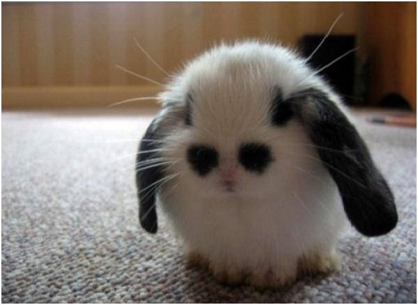 Bunny-Cutest Animals Ever