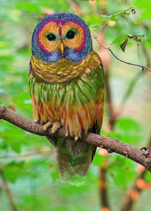 A hippy owl-Viral Photos That Turned Out To Be Fake