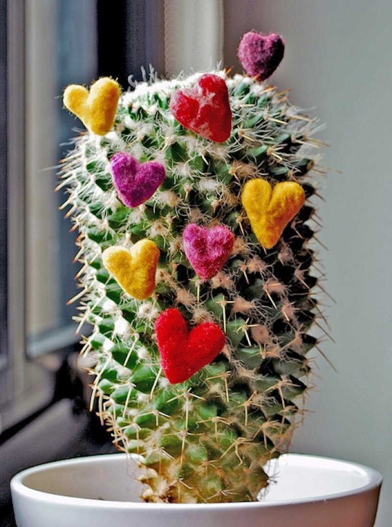 Cactus Love-15 Disgusting Valentine's Day Gifts Ever