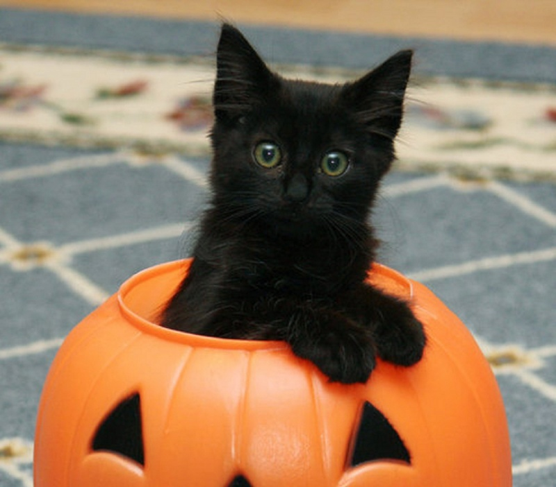 A Cat-15 Weird Things Kids Got On Halloween Trick-or-Treat