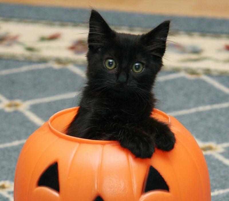 A Cat-15 Weird Things Kids Got On Halloween Trick-or-Treat