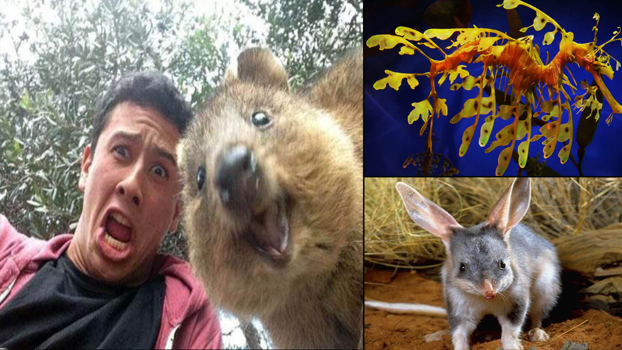 15 Super Cool Animals That You may Find Only in Australia
