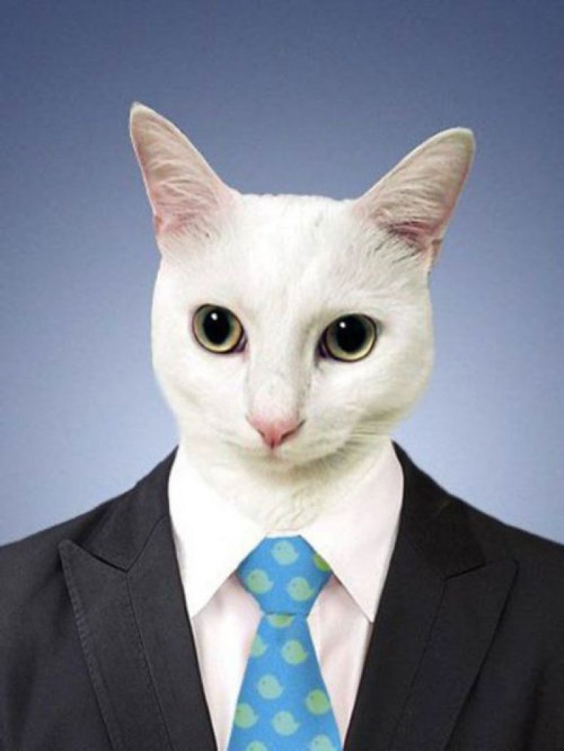 This Cat Picture-15 Hilarious Photoshop Fixes Ever