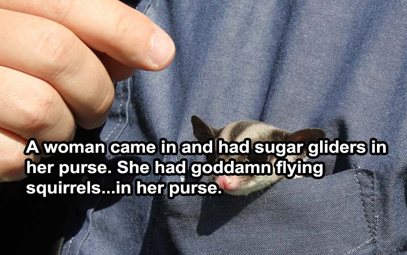 Sugar Glider In Purse-15 Servers Reveal The Craziest Things That Happened In Restaurants