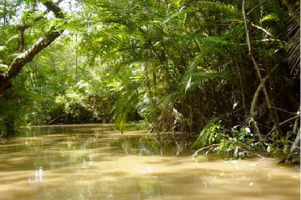 Visit The Amazon Rainforest-Best Bucket List Ideas