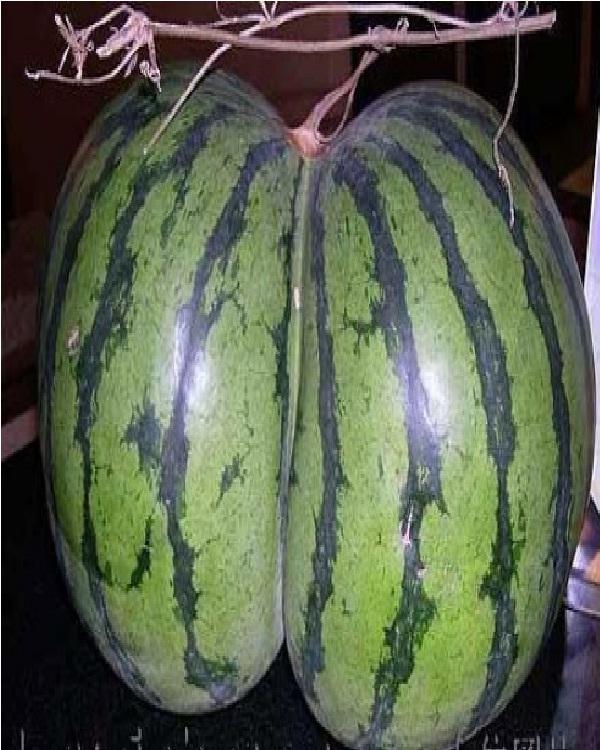 Butt watermelon-Top 15 Weirdest Shaped Fruits/vegetables