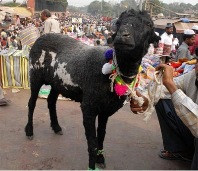 Goat-Most Sacred Animals In The World
