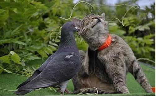 Ohh that's it right behind the ear!!-Wonderful Friendship Between Animals