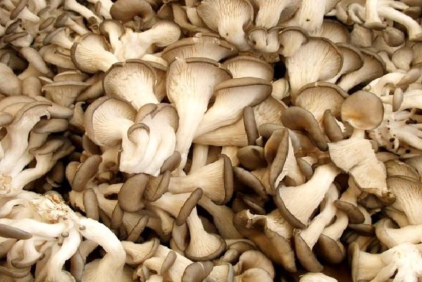 Mushrooms-Foods That Boost Immunity