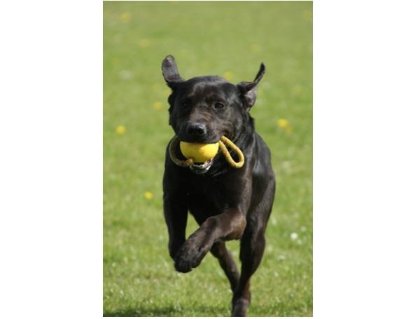 Drop It-Essential Dog Training Tips
