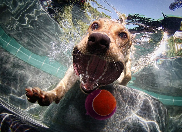 Doggy Sprinkler-Amazing Perfectly Timed Photos Of Animals