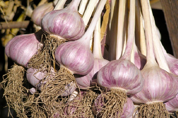 Garlic-Foods That Increase Sperm Count