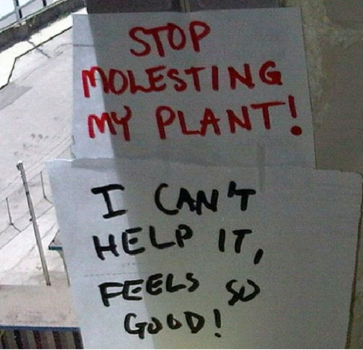 Plant Molester-12 Smart And Witty Replies To Written Notes