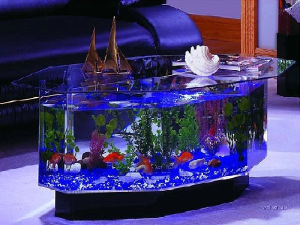 Coffee table-Creative Aquariums