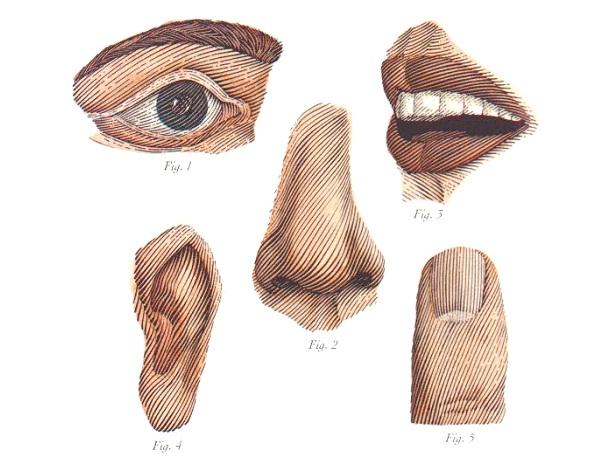 Five Human Senses-Most Popular Myths Debunked