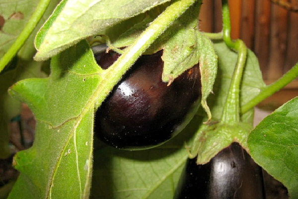 Eggplant-Most Favorite Pizza Toppings