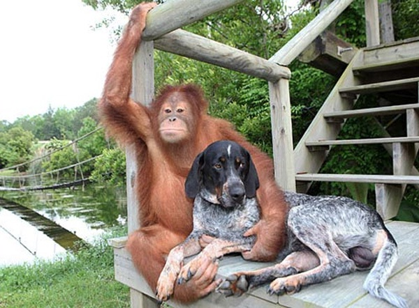 Loving Furry Friends-Worlds Oddest Couples