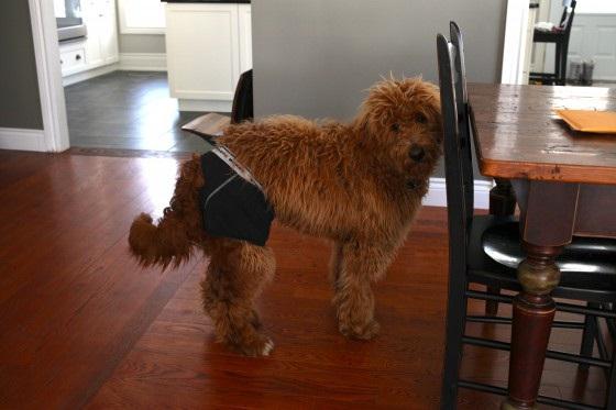 Dogs in Duds-36 Weirdest Websites On The Internet