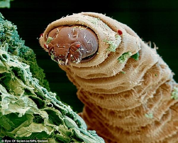 Maggot-Ugliest Bugs
