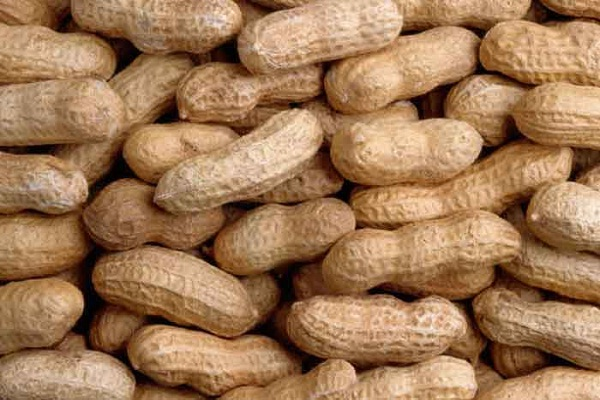 Peanuts-Foods That Are Going Extinct Thanks To Climate Change