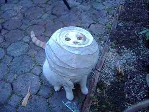 The eyes are peeking out-Funny Animals Stuck In Objects