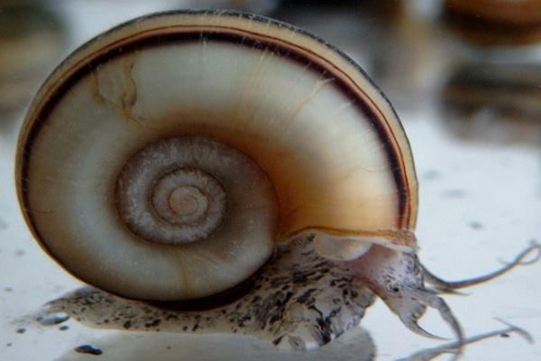 Snails-Weird Facts About Animals