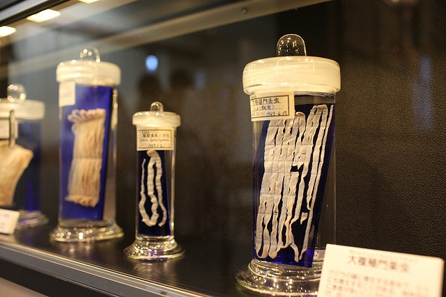 Meguro Parasitological Museum-World's Most Frightening Museums