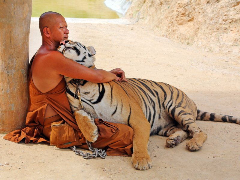 A Buddhist Monk With A Tiger-13 Awesome Pictures That Will Make Your Day