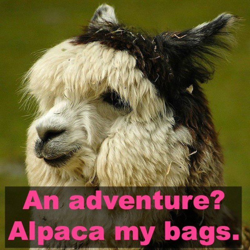 An Adventure? Alpaca My Bags!-12 Hilarious Animal Puns That Will Make You Lol