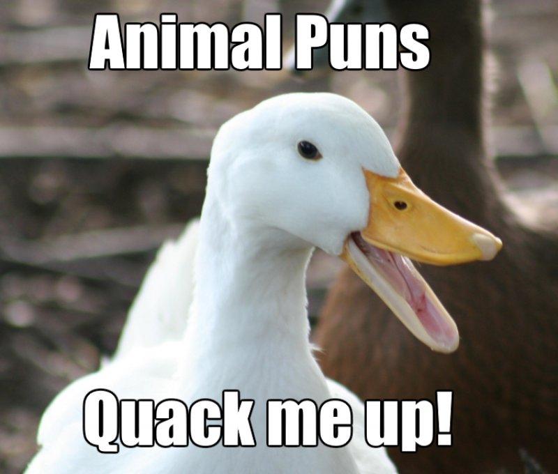 Animal Puns Quack Me Up!-12 Hilarious Animal Puns That Will Make You Lol