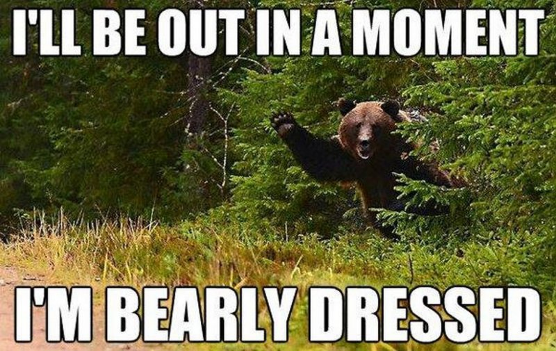 Bearly Dressed-12 Hilarious Bear Puns That Will Make You Cry