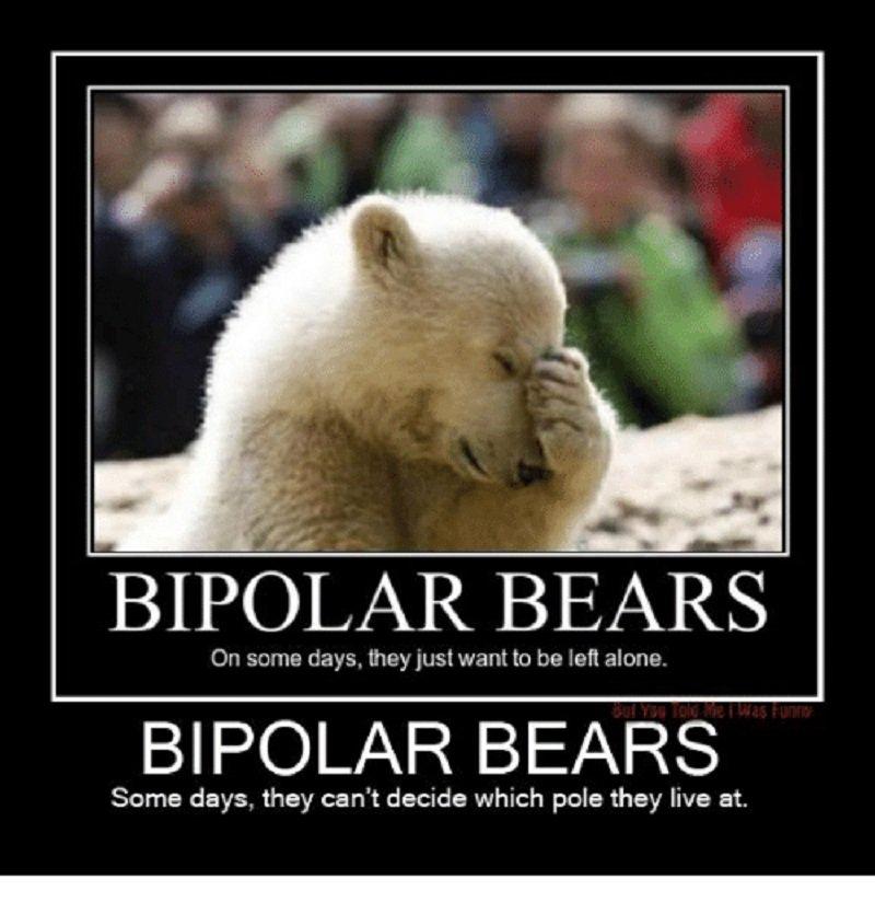 Bipolar Bears-12 Hilarious Bear Puns That Will Make You Cry