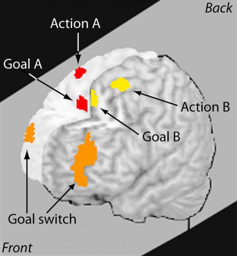 Brain Can't Multitask