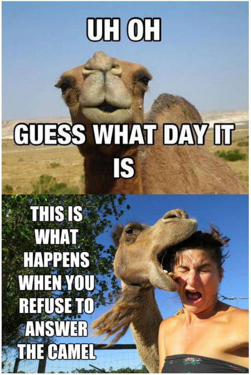 Camel, Again!-12 Funny Hump Day Memes That Will Make Your Whole Week