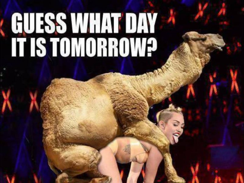 Camiley Cyrus In Action!-12 Funny Hump Day Memes That Will Make Your Whole Week