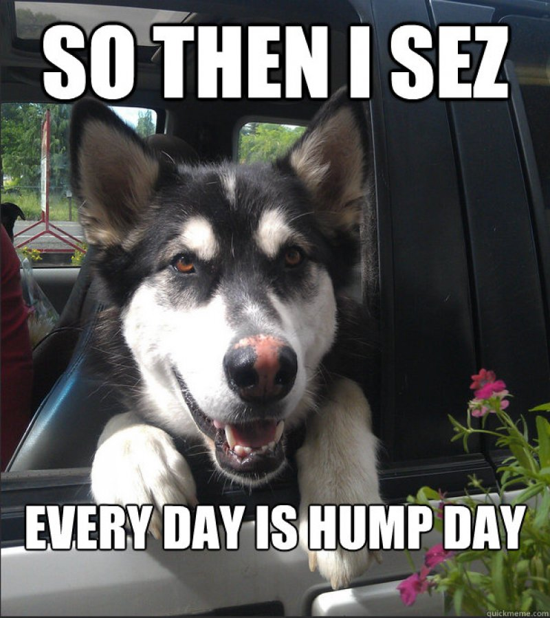 Every Day Is A Hump Day-12 Funny Hump Day Memes That Will Make Your Whole Week