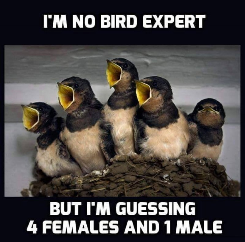 Four Females And One Male!-12 Hilarious Animal Memes That Will Make Lol