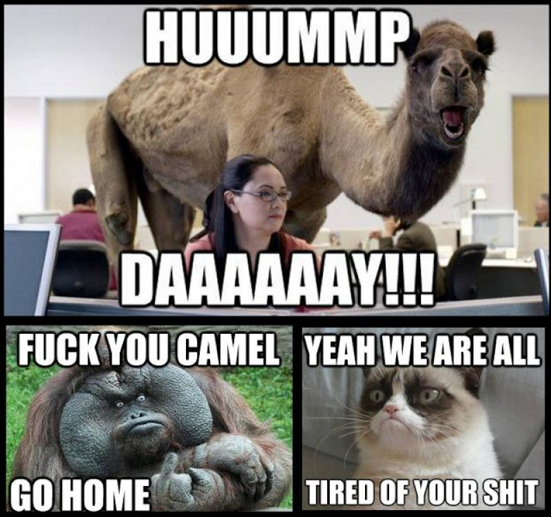 GEICO Camel-12 Funny Hump Day Memes That Will Make Your Whole Week