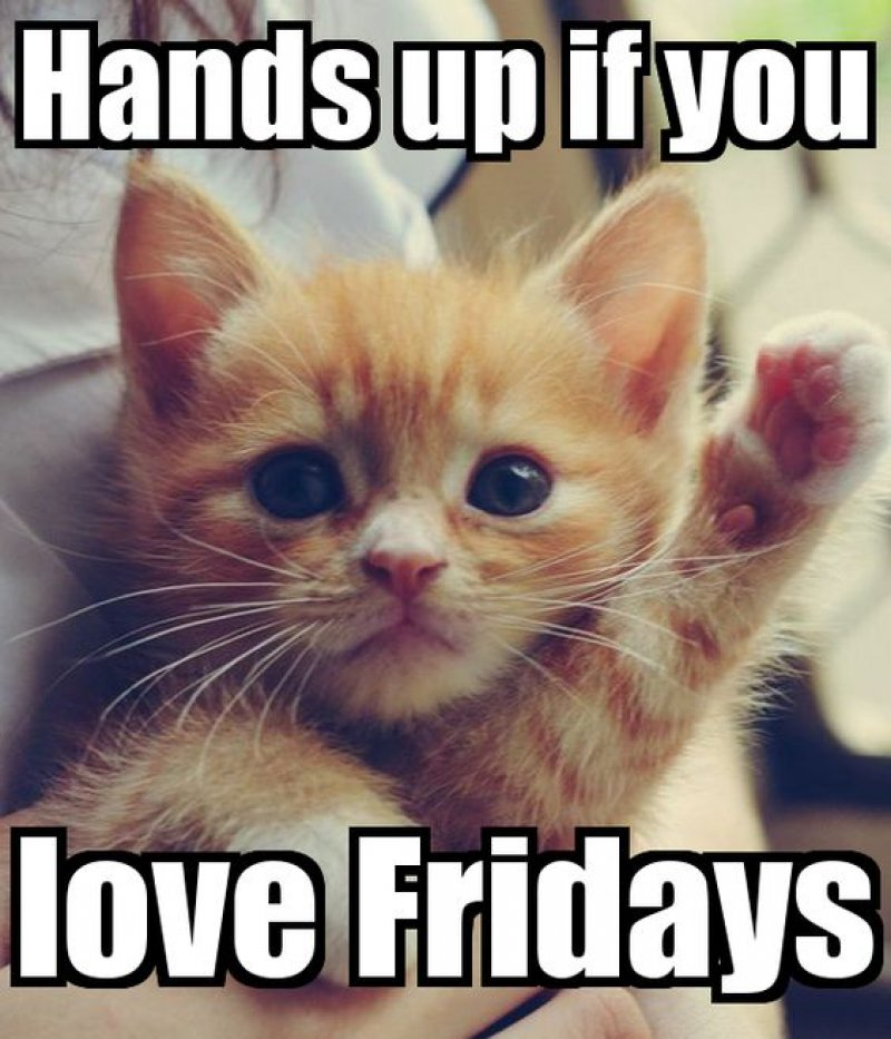 Hands Up If You Love Fridays! -12 Hilarious Friday Memes That Will Brighten Up Your Friday