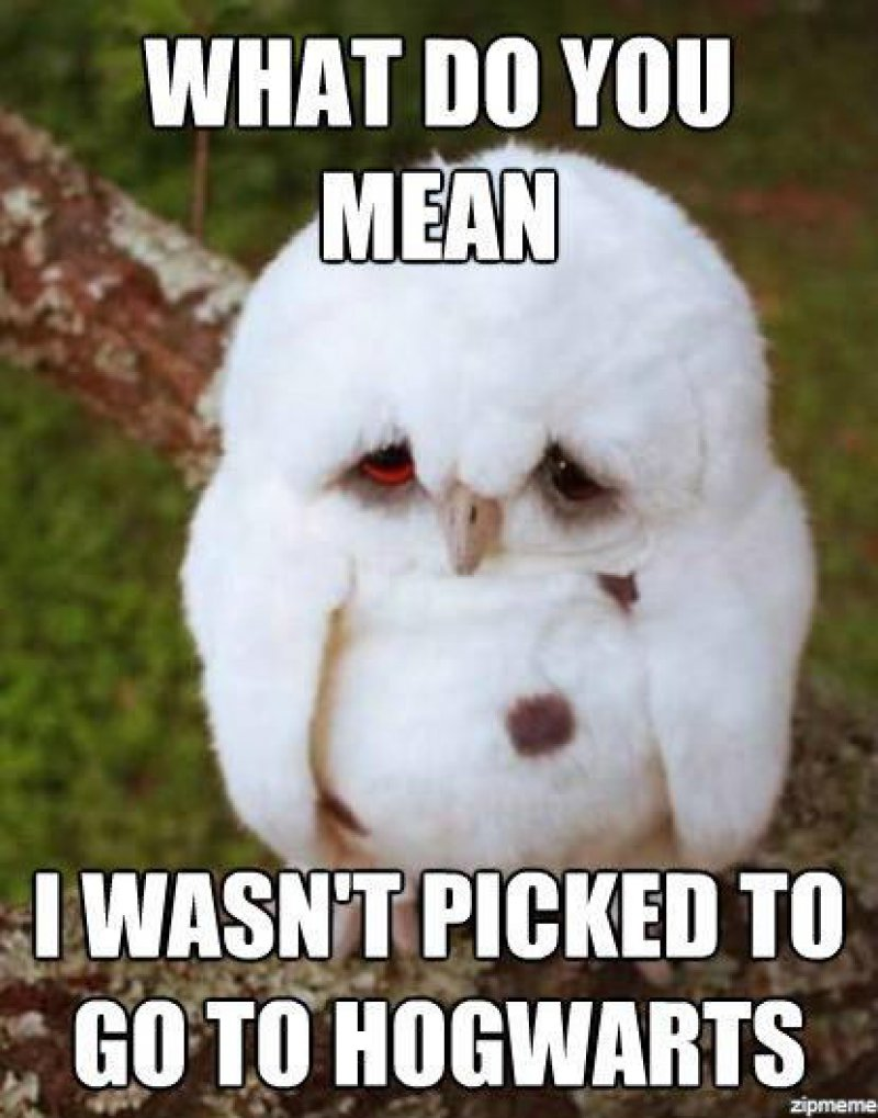 Hedwig, Jr.?-12 Hilarious Animal Memes That Will Make Lol