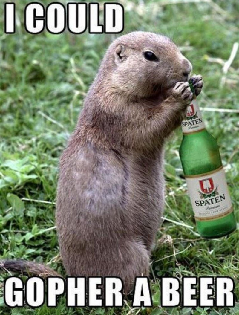 I Could Gopher A Beer-12 Hilarious Animal Puns That Will Make You Lol