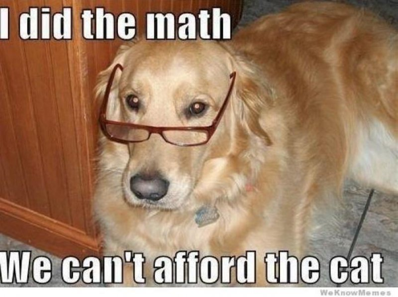 I Did The Math, We Can't Afford The Cat-12 Funny Dog Memes That Will Make You Lol