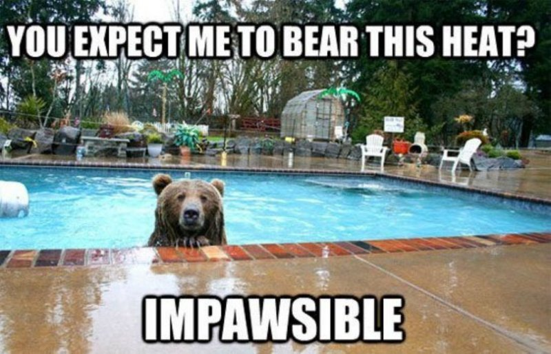Impawsible!-12 Hilarious Bear Puns That Will Make You Cry