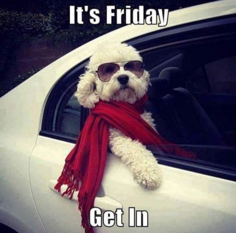 It's Friday, Get In!-12 Hilarious Friday Memes That Will Brighten Up Your Friday