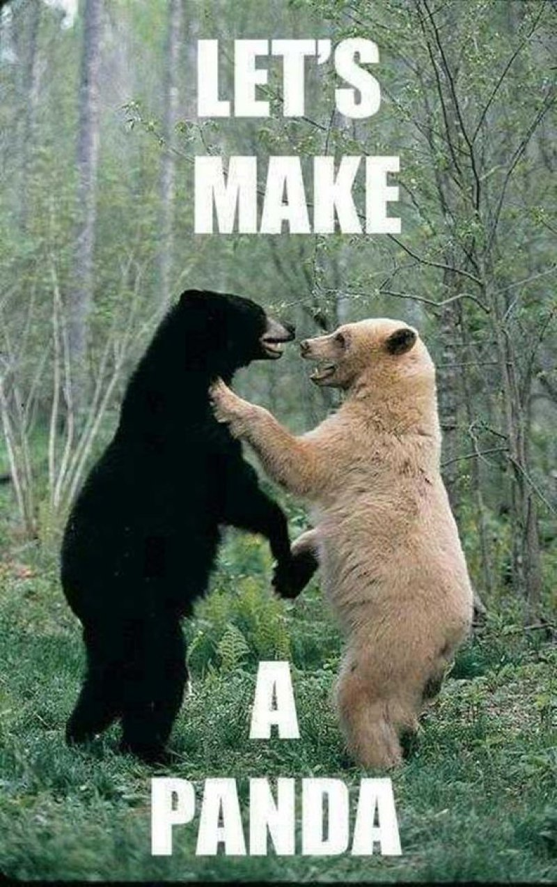 Let's Make A Panda! -12 Hilarious Animal Memes That Will Make Lol