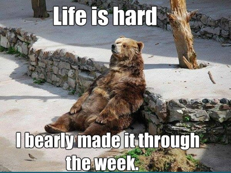 Life Is Hard!-12 Hilarious Bear Puns That Will Make You Cry