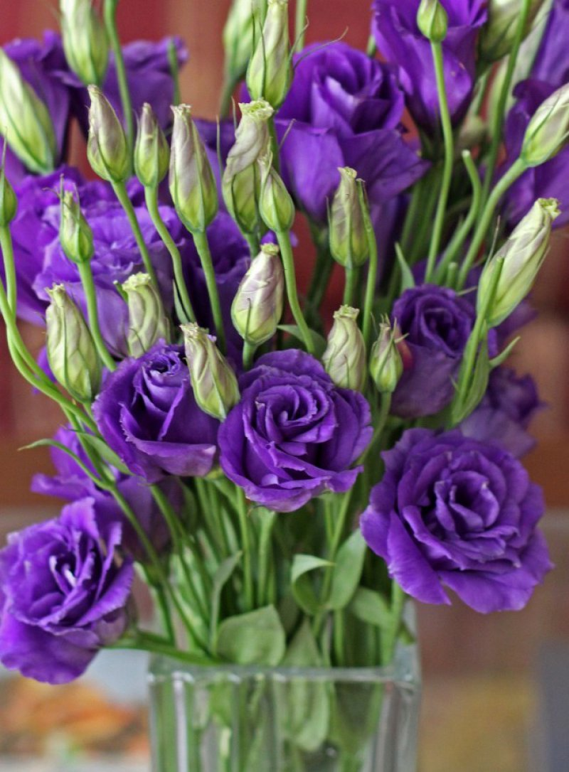 Lisianthus-12 Most Beautiful Flowers In The World