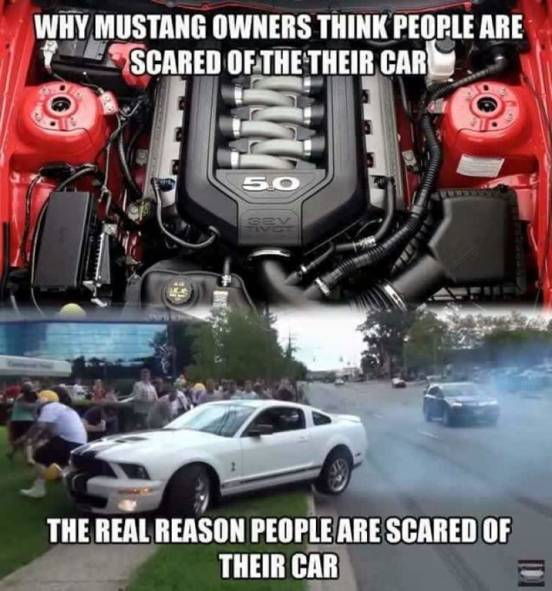 Mustang Hate Continues!-12 Funny Ford Memes That Are Sure To Piss Off A Ford Owner