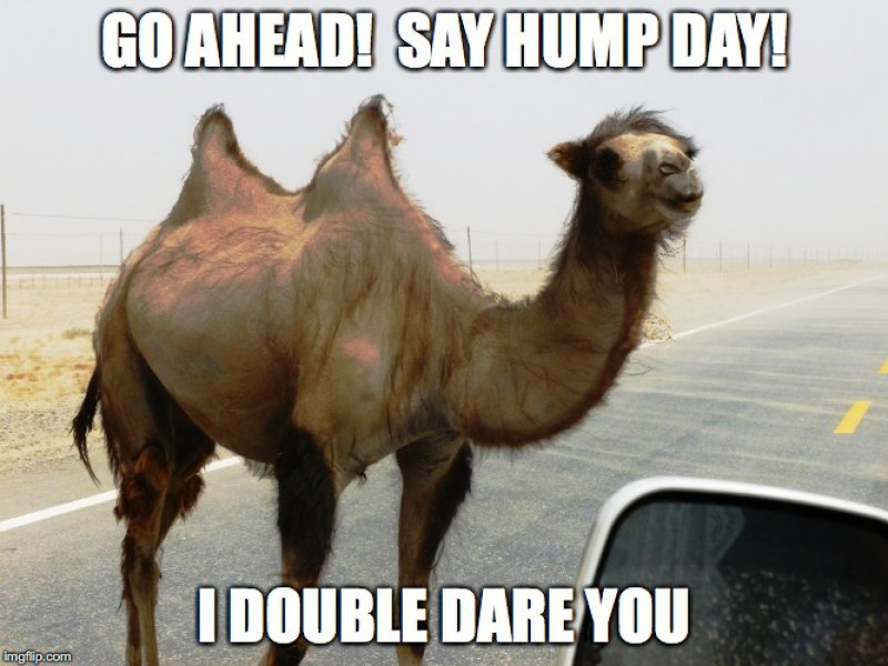 My Humps, My Humps, My Lovely Double Humps!-12 Funny Hump Day Memes That Will Make Your Whole Week